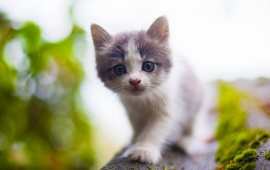 Kitten Bokeh Roof