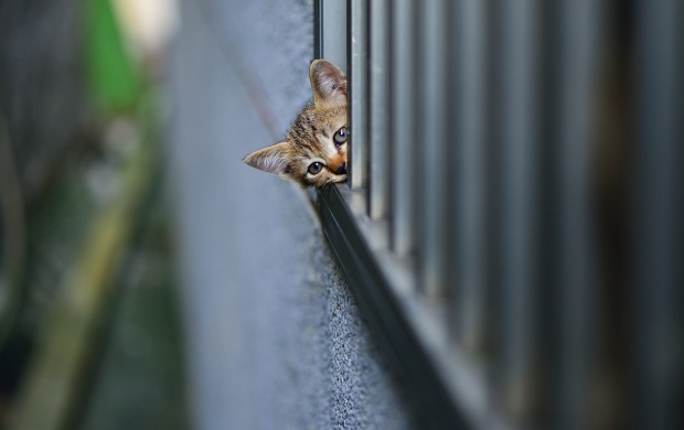 Kitten Watching At Wall (click to view)