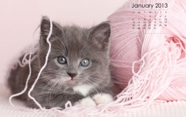 Kitten With January 2013