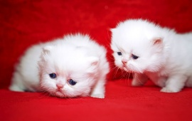 Kittens Cuties