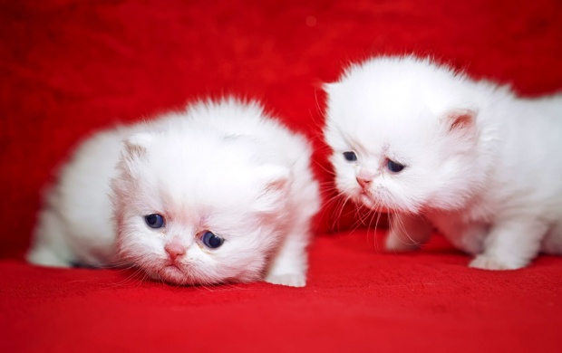 Kittens Cuties (click to view)