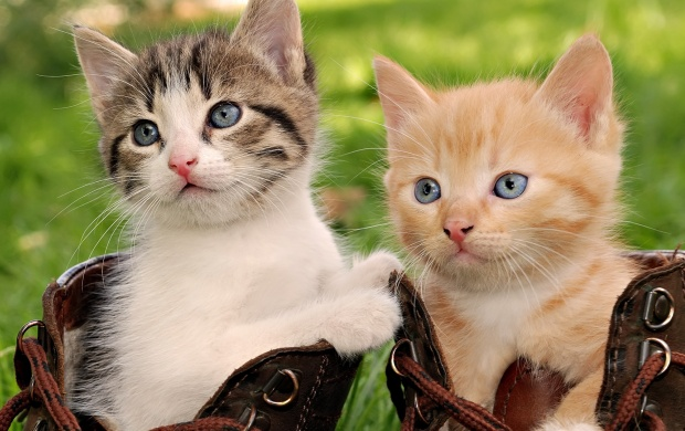 Kittens In Boots (click to view)