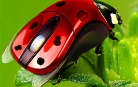 Ladybirds Mouse