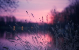Lakeside Grass and Purple Sunset