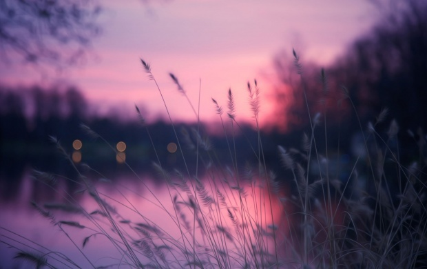Lakeside Grass And Purple Sunset Wallpapers