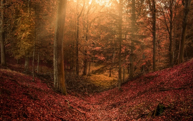 Leaf Carpet In The Forest (click to view)