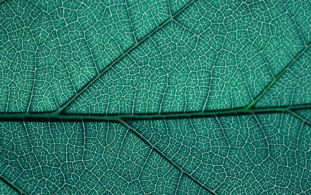 Leaf Texture Closeup (click to view)