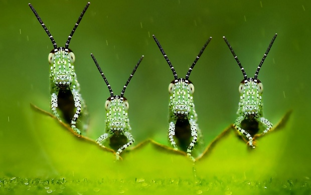 Little Green Insects (click to view)