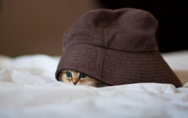 Little Kitty Hiding
