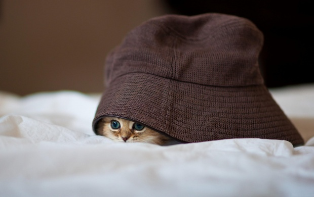Little Kitty Hiding (click to view)