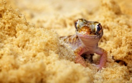 Lizard In Beach Sand