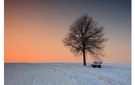 Lonely Tree And Bench In The Snow