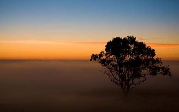 Lonely Tree In The Mist (click to view)