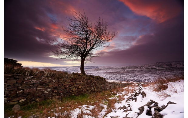 Lonely Tree In The Winter (click to view)