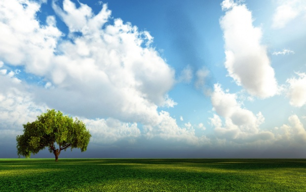 Lonely Tree on Green Field (click to view)