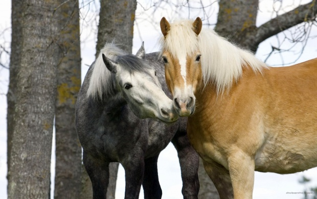 Love between the Horses (click to view)