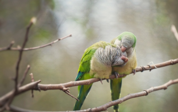 Love Birds (click to view)