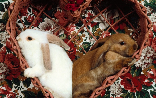Lovely Rabbits (click to view)
