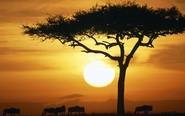 Maasai Mara In Buffalos Sunset (click to view)