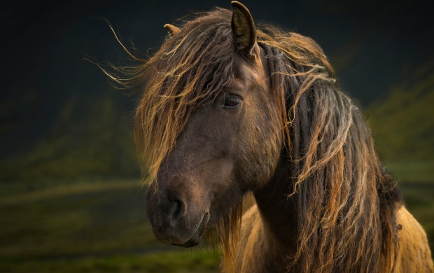 Mane Horse Look (click to view)