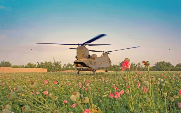 Military Helicopter With Flower (click to view)