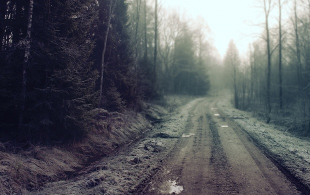 Misty Forest Dirt Road (click to view)
