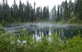 Misty Forest Lake