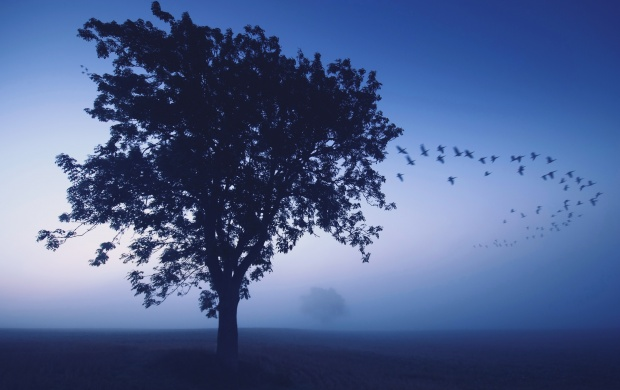 Misty Morning With Flying Bird (click to view)