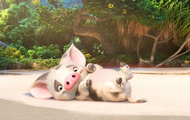 Moana Pig (click to view)