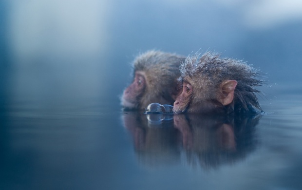 Monkey In Water (click to view)