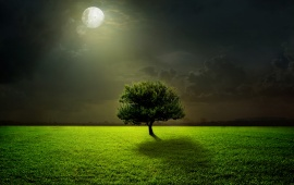 Moonlight Field And Tree