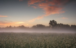 Morning Mist Field