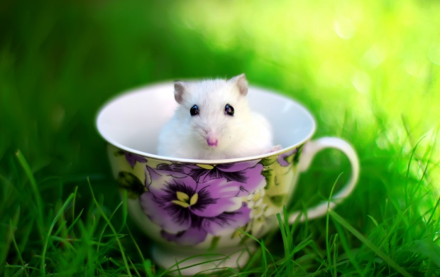 Mouse In Cup (click to view)