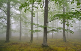 Nature Forest Foliage And Fog