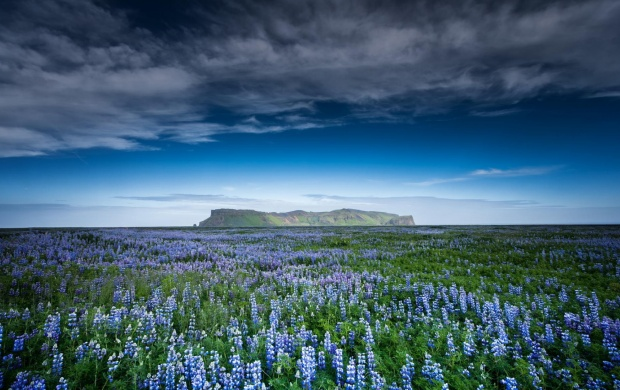 Nature Mountains Field Flowers (click to view)