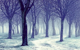 Nature Snowy Winter Forest Trees