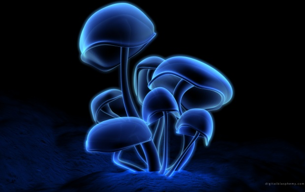 Neon Mushrooms (click to view)