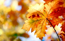 Nice Autumn Leaves