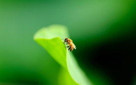 Nice Bee On Green Leaves