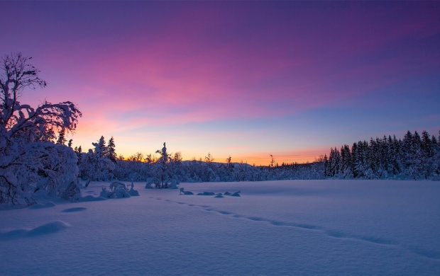 Norway Winter Snow Sunset Trees (click to view)