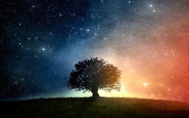 Oak Tree And Starry Night (click to view)