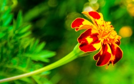 Orange Flower And Green Leaves