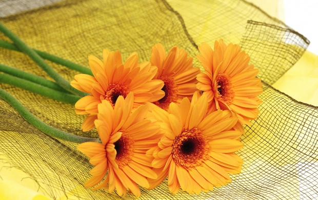 Orange Flowers (click to view)