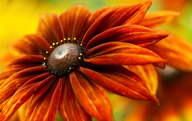 Orange Spring Flower (click to view)