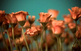 Orange Stem Flowers Background