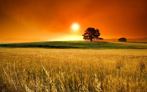 Orange Sunset Above Corn Field (click to view)
