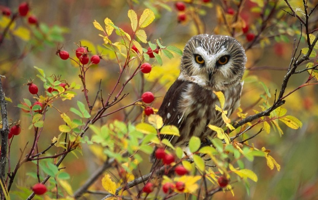 Owl Bird Sitting At Branch (click to view)