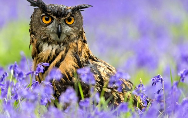 Owl Bird Spring Purple Flowers (click to view)