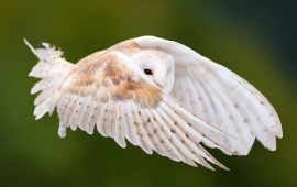 Owl Flying In Sky
