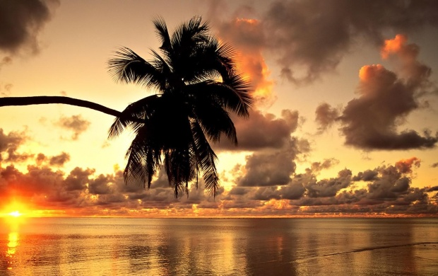 Palm Shape At Sunset (click to view)